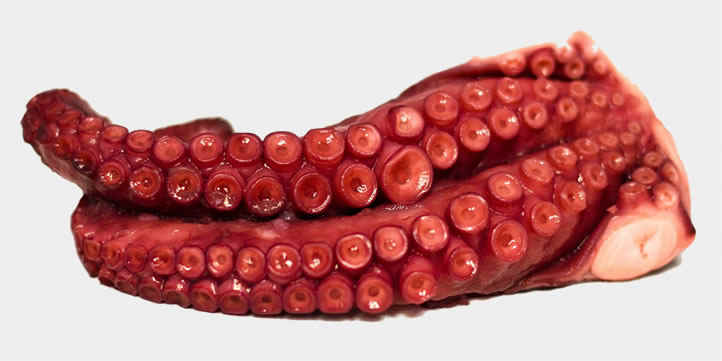 Extra quality Salanort octopus. Fine quality Atlantic octopus cooked at low temperature and vacuum-packed. Ready to eat.